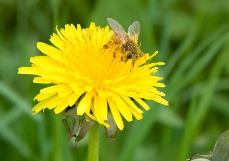 abeille_s